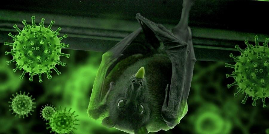 bat, coronavirus
