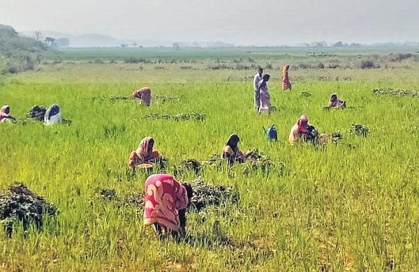 Harvesting in full swing in UP as Yogi govt comes to farmers' rescue amid lockdown