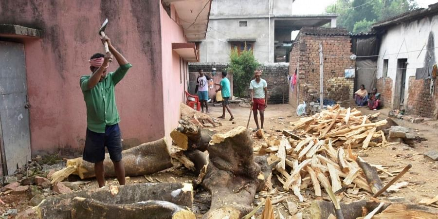 A labourer cuts the wood of an uprooted tree due to heavy wind and rain ahead of cyclone 'Amphan' landfall, in Ranchi, Wednesday, May 20, 2020. Super Cyclone Amphan is expected to make landfall near Sundarbans in West Bengal by late evening today.
