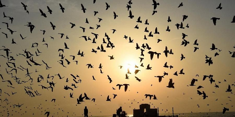 Residents feeding pigeons at Elliots beach in Chennai (EPS | Ashwin Prasath)