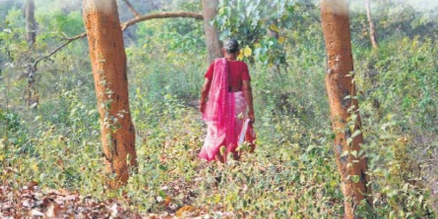 A woman walks through a thick  forest patch  to reach Joida near Talgera village