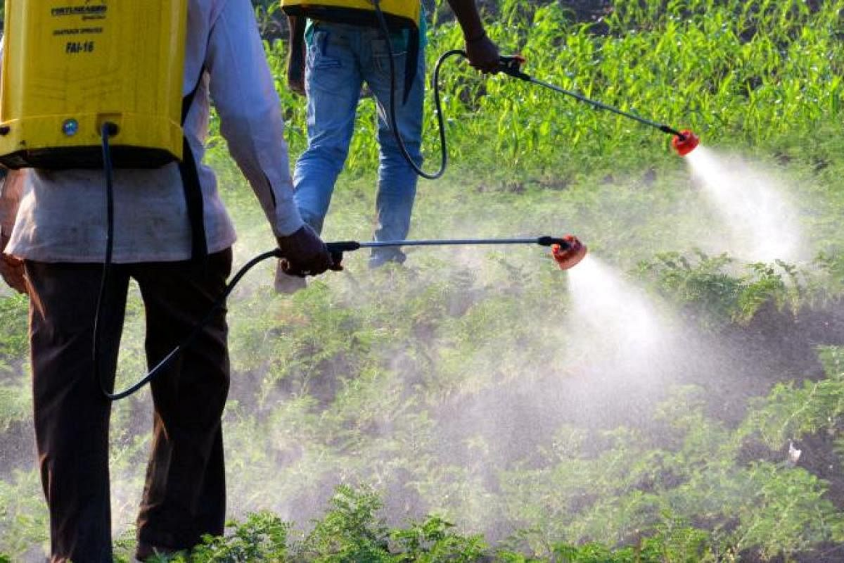 Abrupt ban on pesticides sparks row between ministries- The New Indian  Express