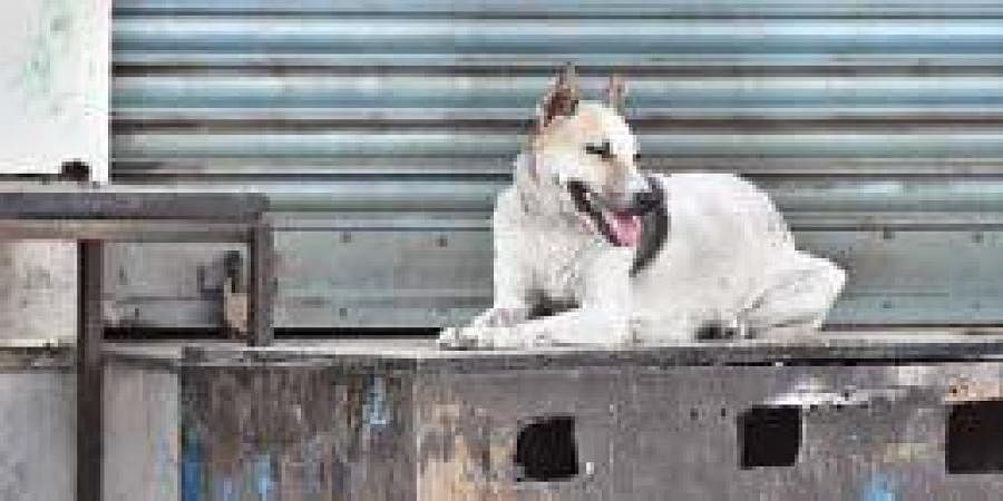 A dog takes shelter at a gas stove in front of shop at a containment zone in Tirupati.