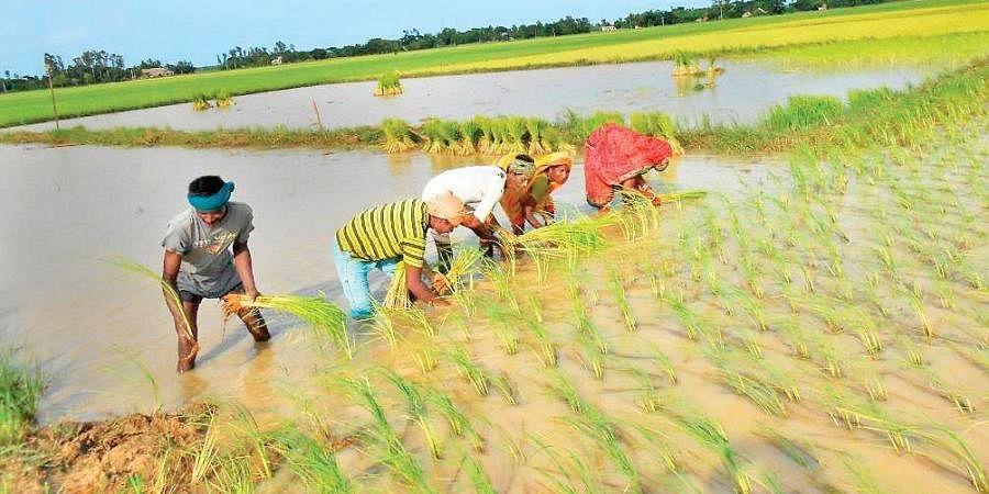 Fertiliser shortage casts cloud on kharif crops- The New Indian Express