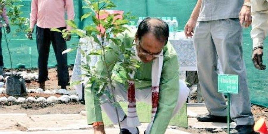 Madhya Pradesh CM Madhya Pradesh CMShivraj Singh Chouhan planting sapling on World Environment Day