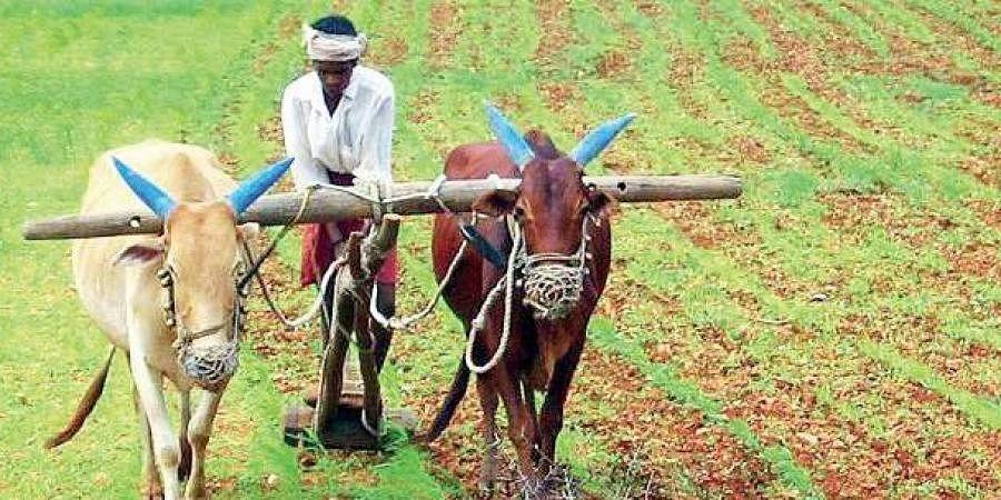 Farmers, Kharif Season, paddy