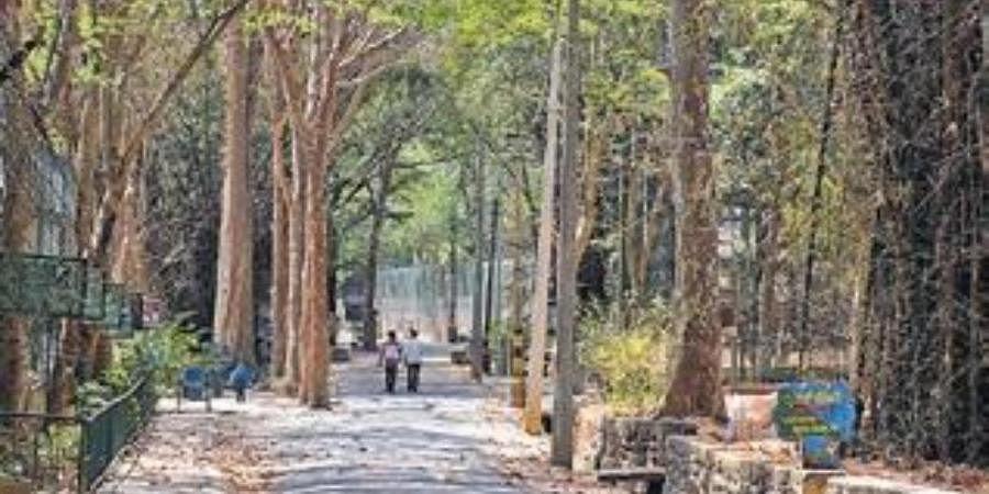 Bengaluru Bannerghatta Biological Park
