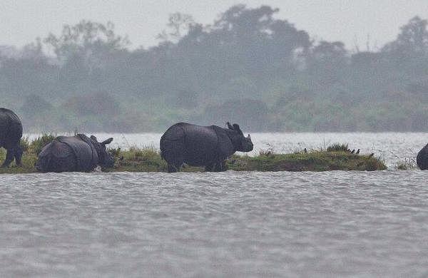 103 dead, 56 lakh affected due to Assam floods