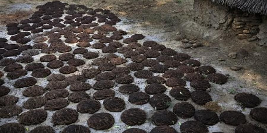 Cow dung cakes  |AP