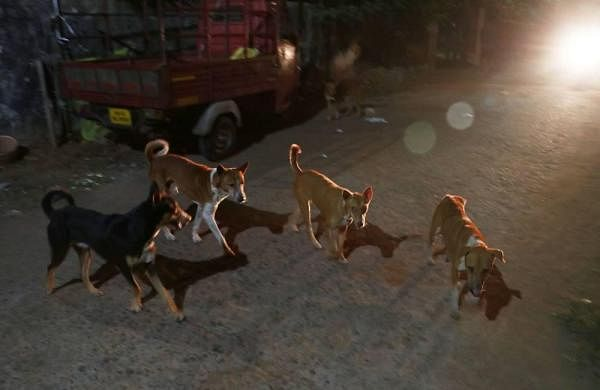 After letter from animal protection group, Nagaland decides to ban dog trade