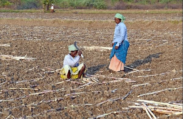 Goa government to release Rs 5.23 crore support price for sugarcane farmers