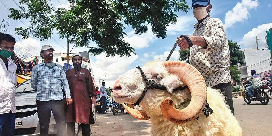 A sheep weighing roughly 70 kg and  worth Rs 80,000 is displayed for sale ahead of Bakrid.