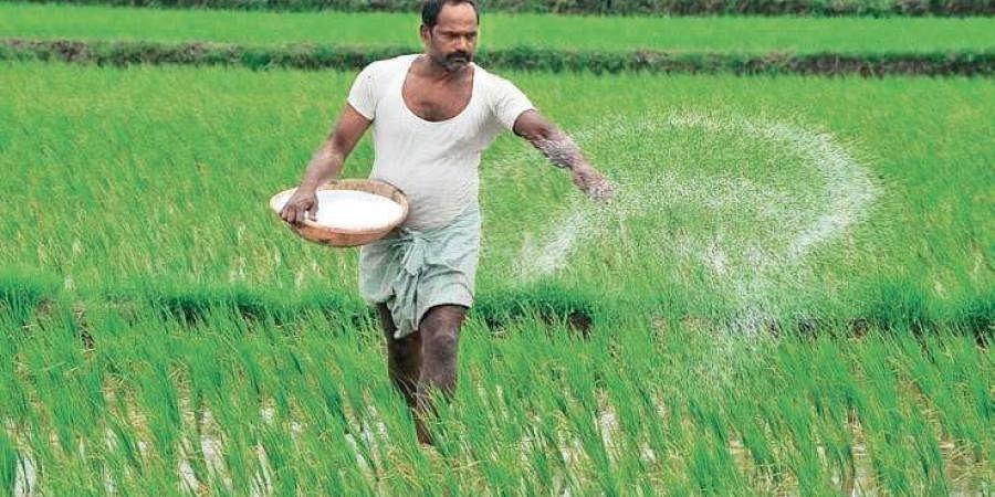 A farmer sprinkling fertiliser on his land