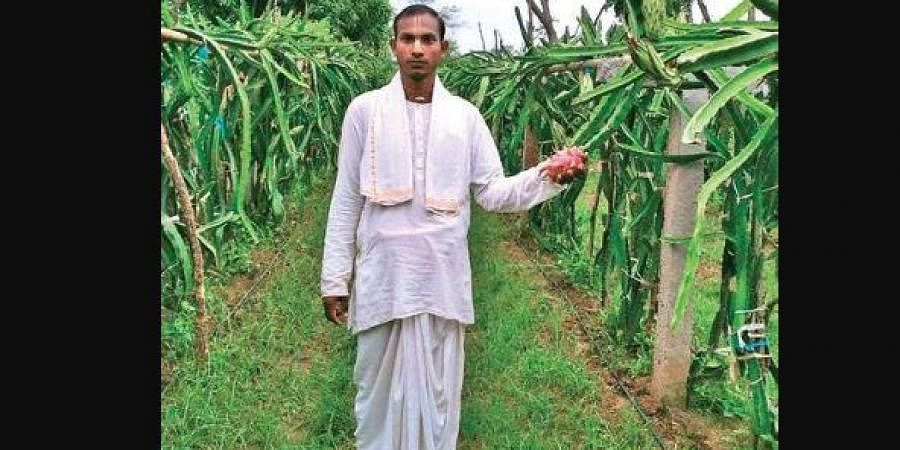 Vaishnava holds a dragon fruit at his farmland in Bamak village