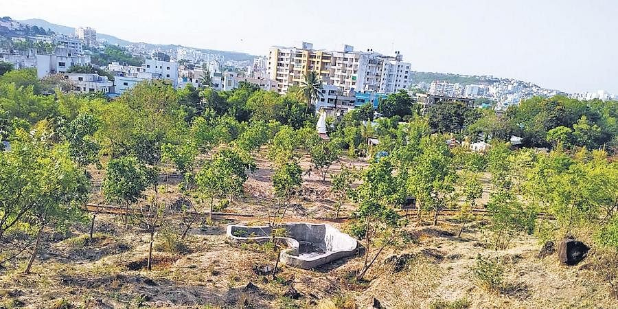 More than 1,000 people visit this newly developed urban forest near Pune every day