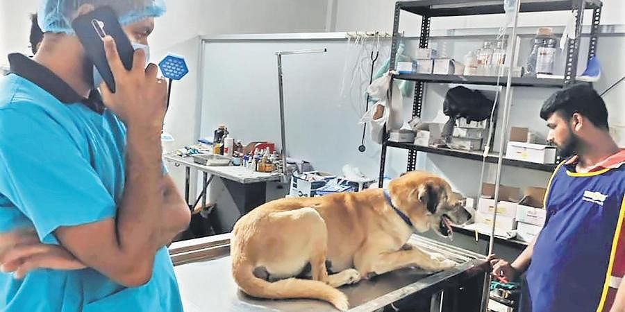 Vikas Luthra has rescued dogs, cats, monkeys, birds and reptiles in the last eight years