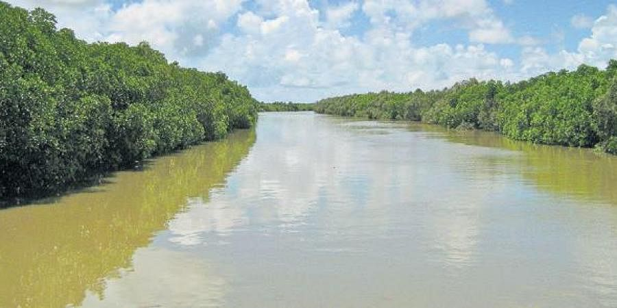 Mangrove forest in Bhitarkanika National Park.