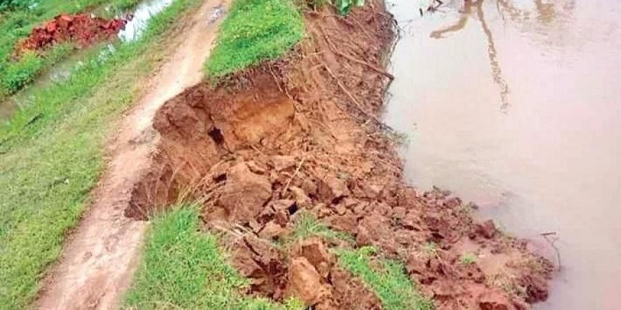 The embankment of Mahanadi river damaged in a village in Jagatsinghpur district.