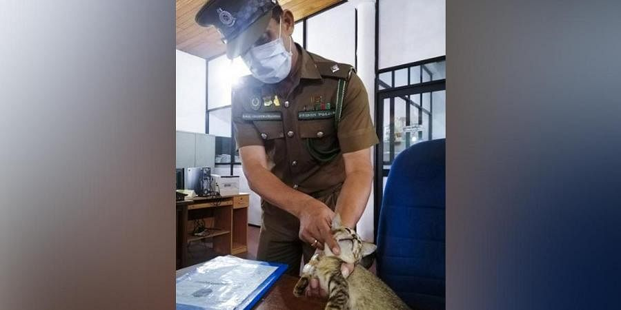 A prison-officer shows a cat detained at the high-security Welikada Prison in Colombo. A cat detained at Sri Lanka's main prison while allegedly trying to smuggle drugs and cell phone SIM cards has escaped