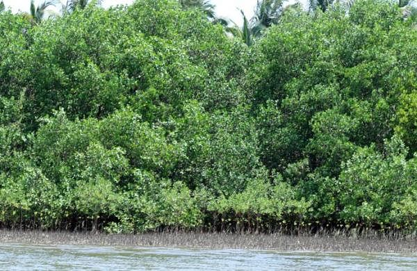 Mangroves destruction to blame for flooding in Mumbai: Experts