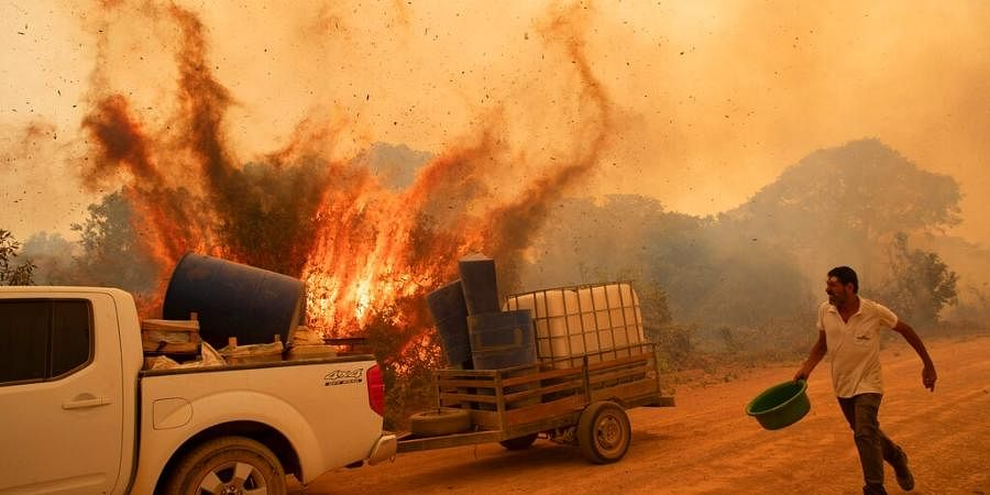 A volunteer tries to douse the fire on the Transpantaneira road in the Pantanal wetlands near Pocone, Mato Grosso state, Brazil,