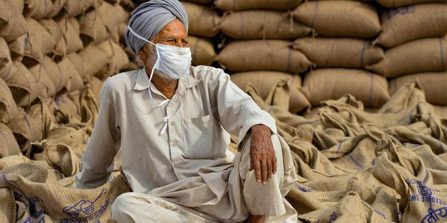 A farmer waits for his wheat produce procured at the New Grain Market amid ongoing COVID-19 lockdown in Chandigarh