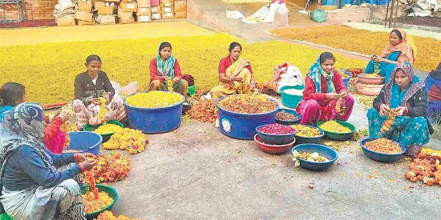 Flowercyclers at Phool.Co