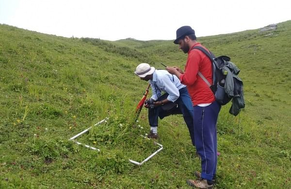 Survey of meadows to check for biodiversity in Uttarakhand