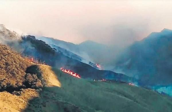 Forest fire in Nagaland's Dzukou Range under control: Officials