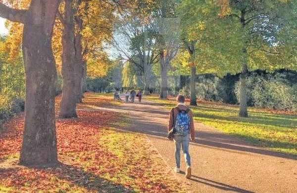 Spending many hours behind your computer screen? Go for a walk to protect your heart, here's why- The New Indian Express