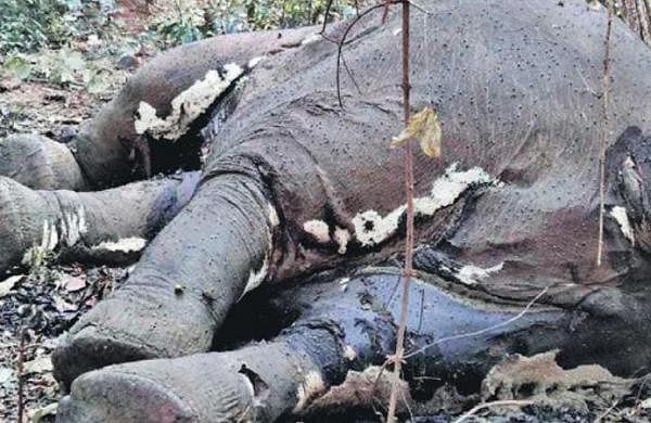 Jharkhand: Report sought from forest officials over elephant's killing
