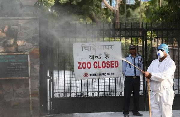 Samples of dead cranes in Delhi zoo test negative for bird flu: Officials
