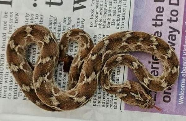 Deadly snaketravels from India to UK among rocks in shipping container