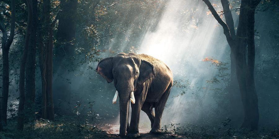 Elephant corridor photo