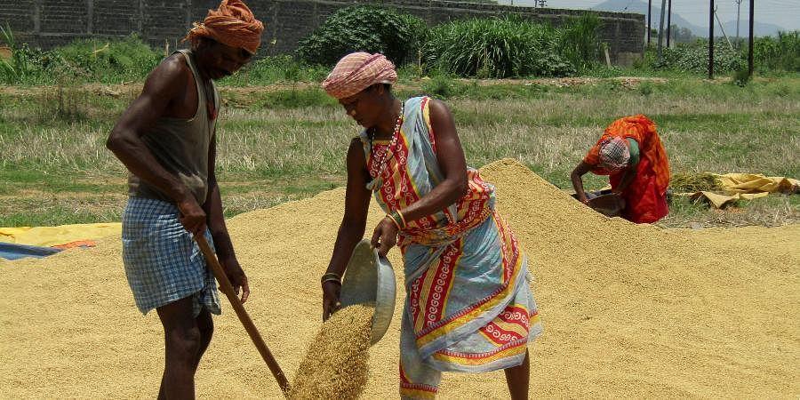Odisha Farmers