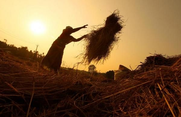 Chhattisgarh govt to auction paddy after record procurement of 92 LMT, Opposition says 'flawed' move