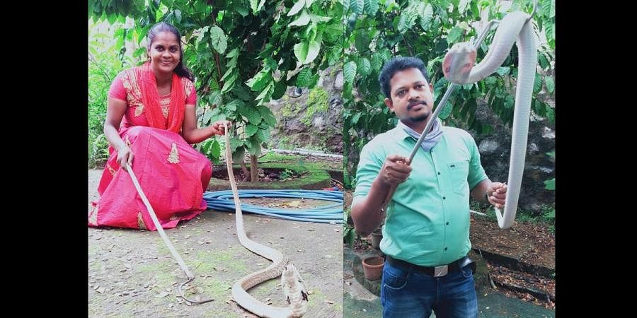 Baiju is one of the certified snake handlers who underwent training.