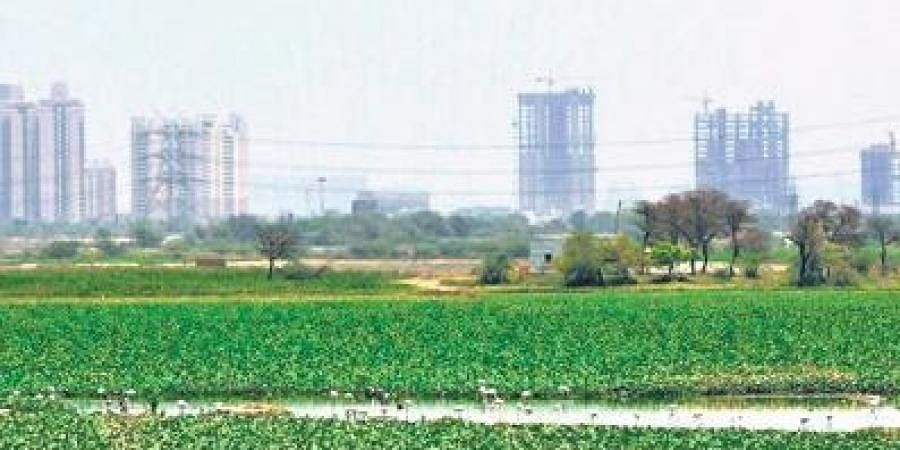 The authority has identified and listed about 1,000 waterbodies in Delhi.