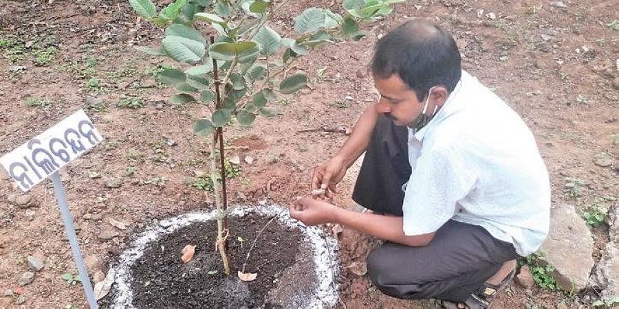 Jayaguru Patra waters a plant by using waste saline pipe