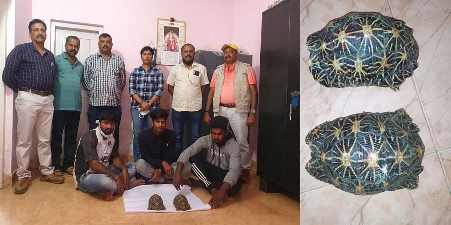 The accused were allegedly trying to sell the star tortoise for Rs 50 lakh. (Photo | Express)