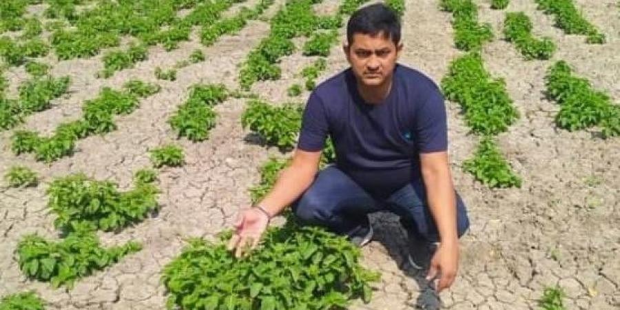 Farmer Amresh Singh with hop shoots in his farm.