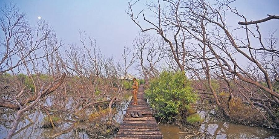 Muthupet mangrove forest