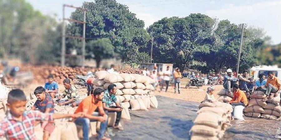 Farmers with unsold ragi bags at a mandi in Koraput | express