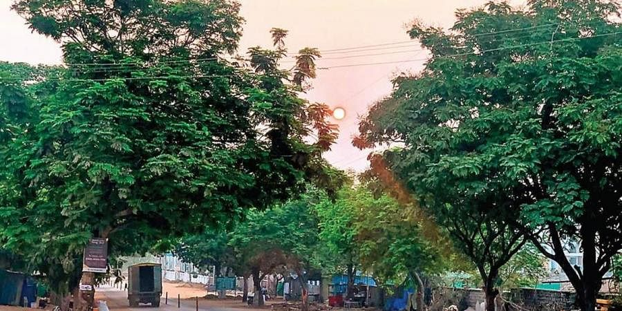 The 2.5-km Gandipet-Shankarpally stretch lined up with 244 trees that were to be felled for the road-widening project