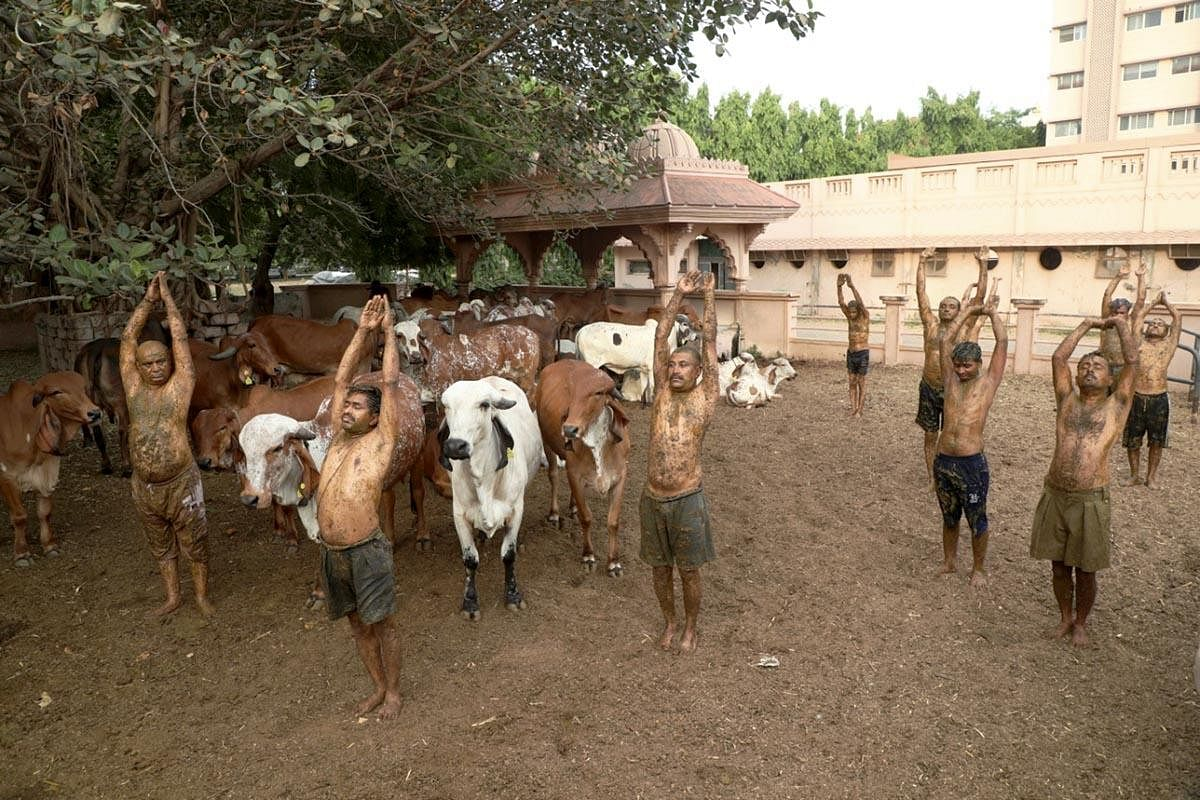 Cowdung to fight Covid-19