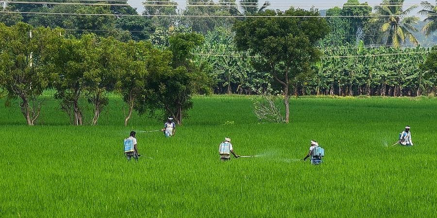 delta farmers