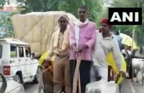 Amid rising fuel prices, wedding procession uses bullock carts to reach venue in UP's Deoria