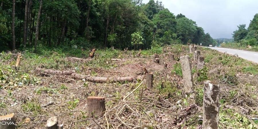 Shillong's fallen trees