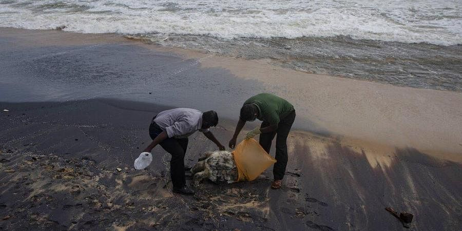 Sri Lankan wild life workers prepare to remove decomposed remains of a turtle lies on a beach polluted following the sinking of a container ship that caught fire while transporting chemicals off Kapungoda.