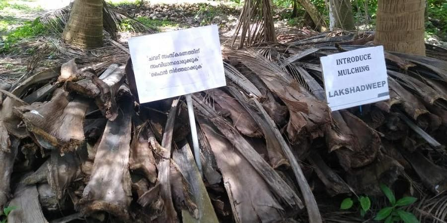 Placards placed on coconut tree waste in Lakshadweep as part of protest by islanders demanding solution to waste treatment
